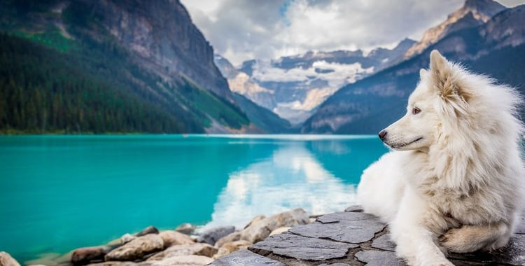 Gorgeous dog and scenery